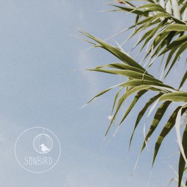 Sonbird EP